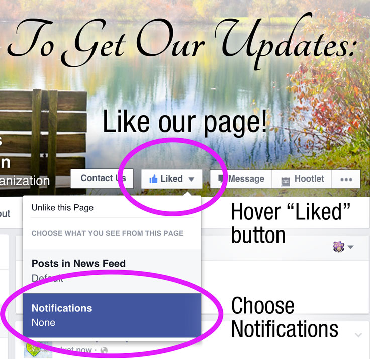 "To get notified when a Fan Page posts on Facebook, hover the ""Liked"" button and click on ""Notifications."""