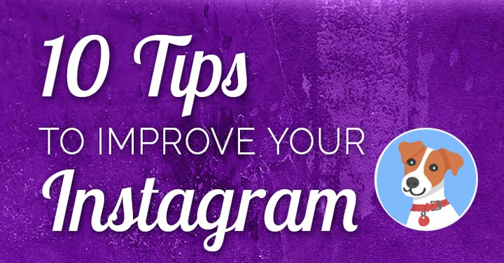 "Need to improve your Instagram account? Take 10 tips from the ""top dog!"" Here are 10 lessons to learn from a fictional fido named Ollie."