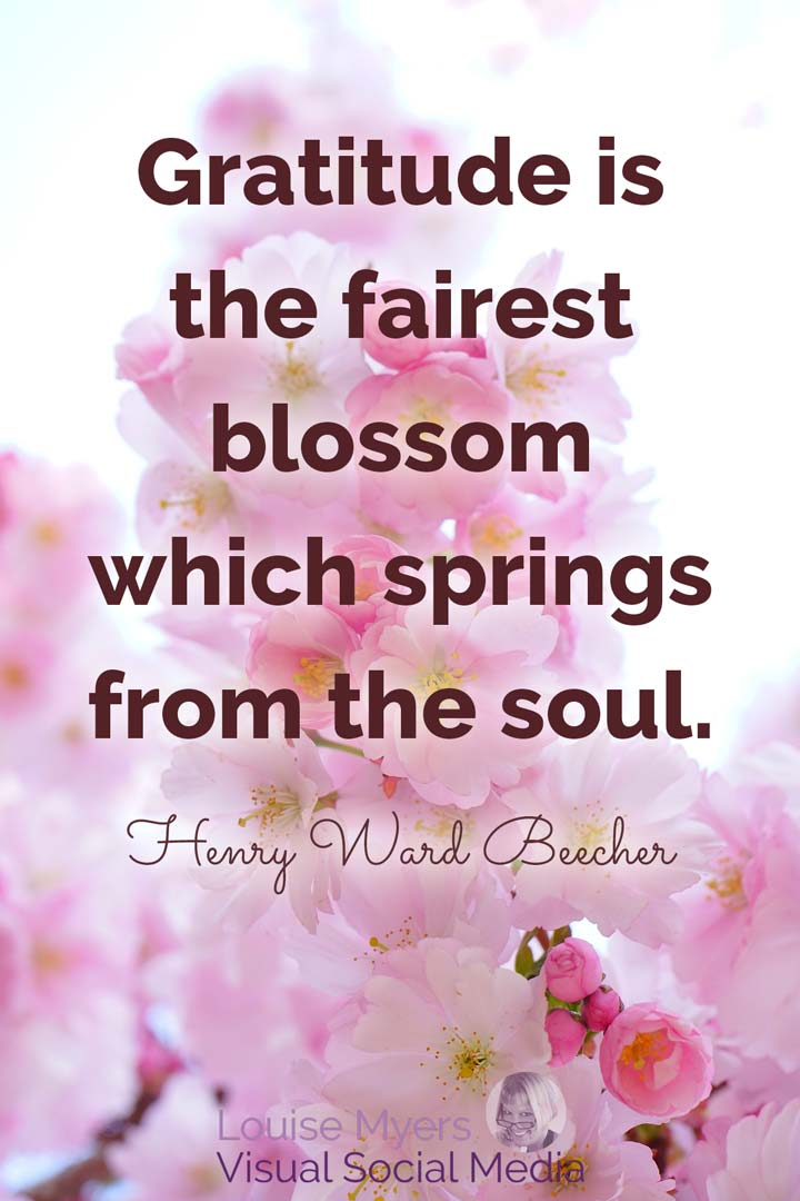 gratitude quote image: gratitude is the fairest blossom