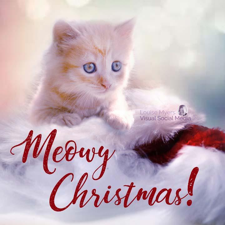 meowy christmas slogan on photo of cute kitten.