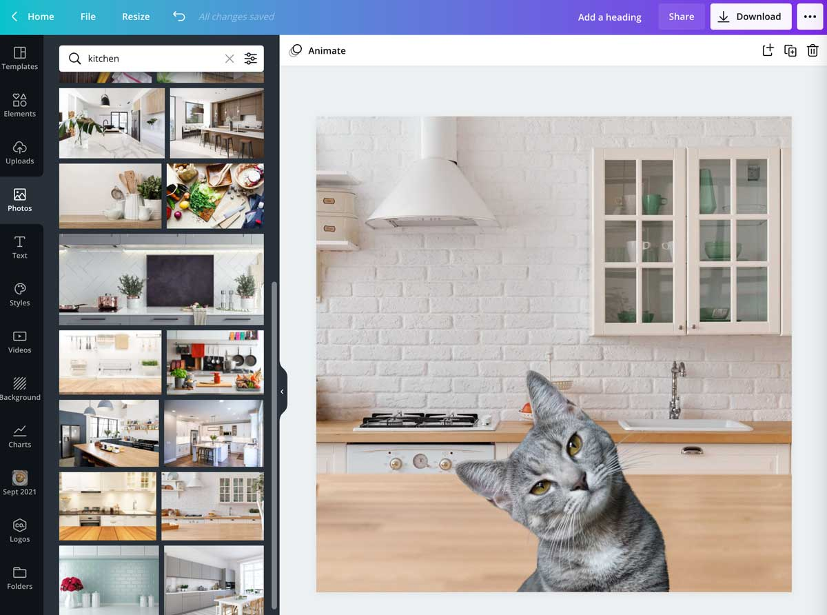 screenshot showing cat photo overlaid on different background photo in canva.
