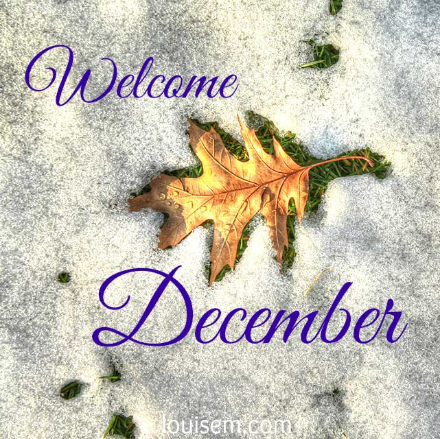 welcome december leaf on snow picture quote.