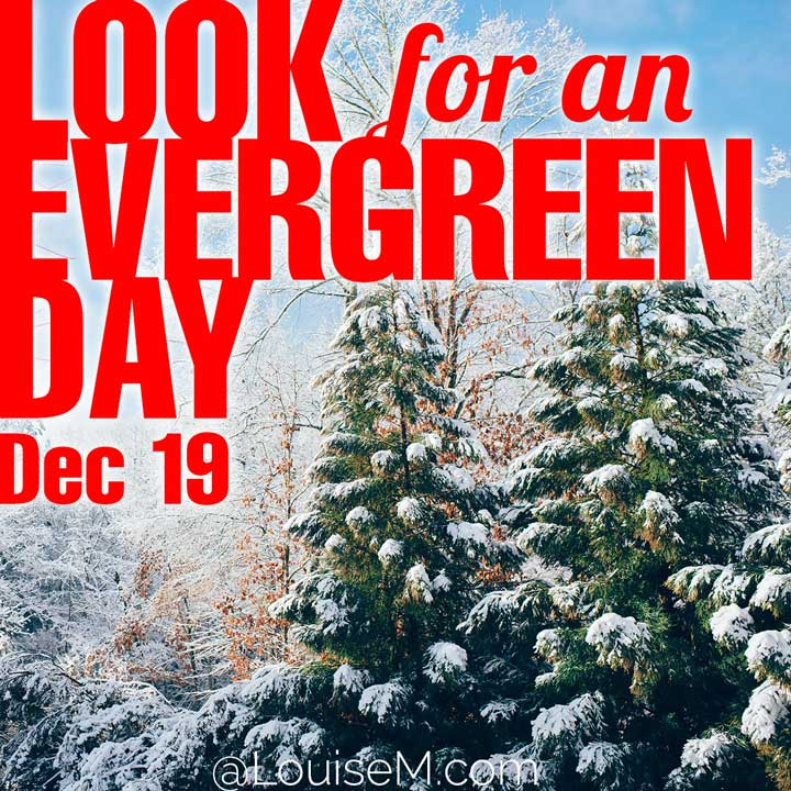 december 19 holiday look for an evergreen day on photo of snowy trees.