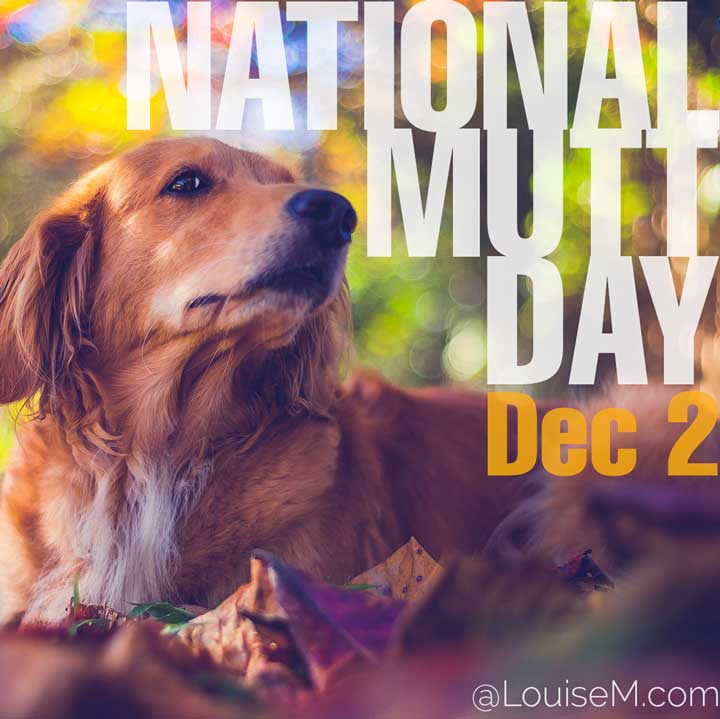 december 2 holiday national mutt day with dog photo.