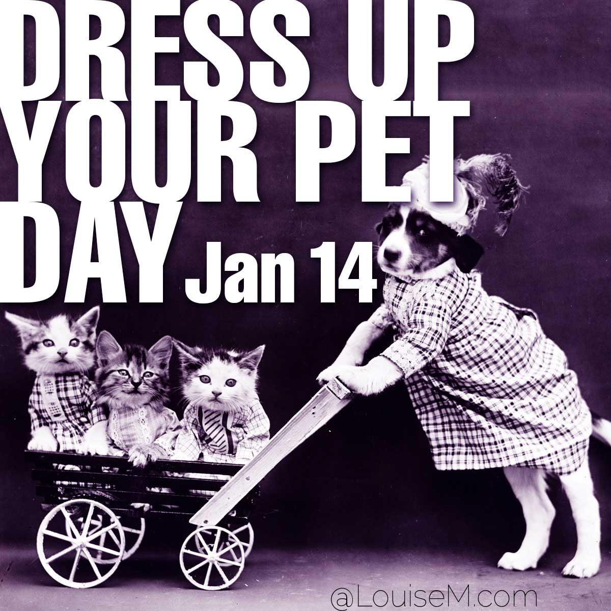 Dress Up Your Pet Day text on photo of pets in costume.