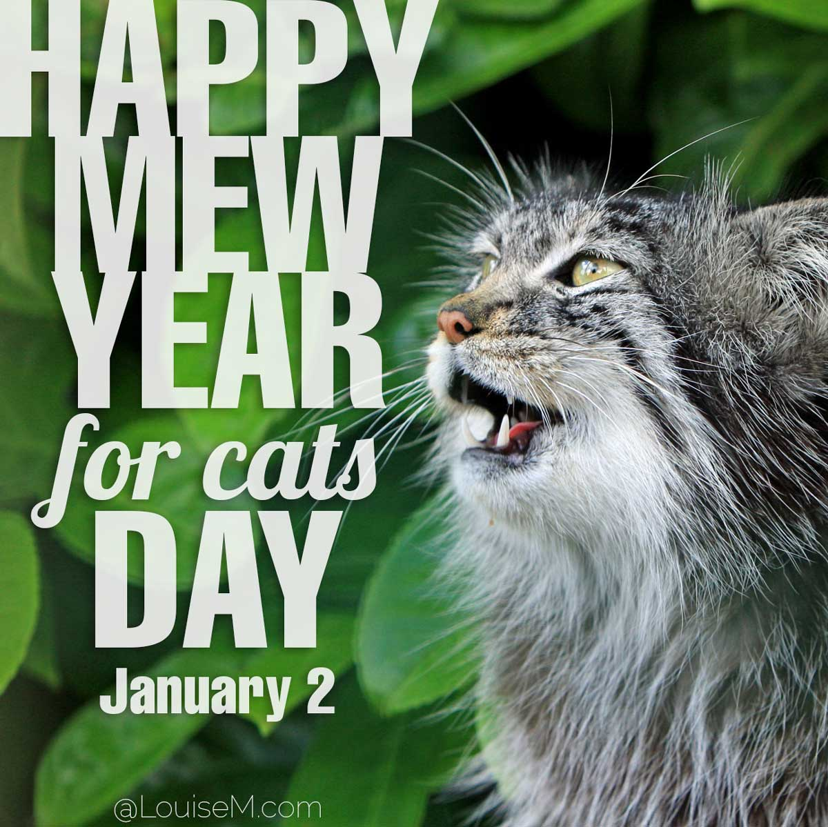 Happy Mew Year For Cats Day on gray cat photo.