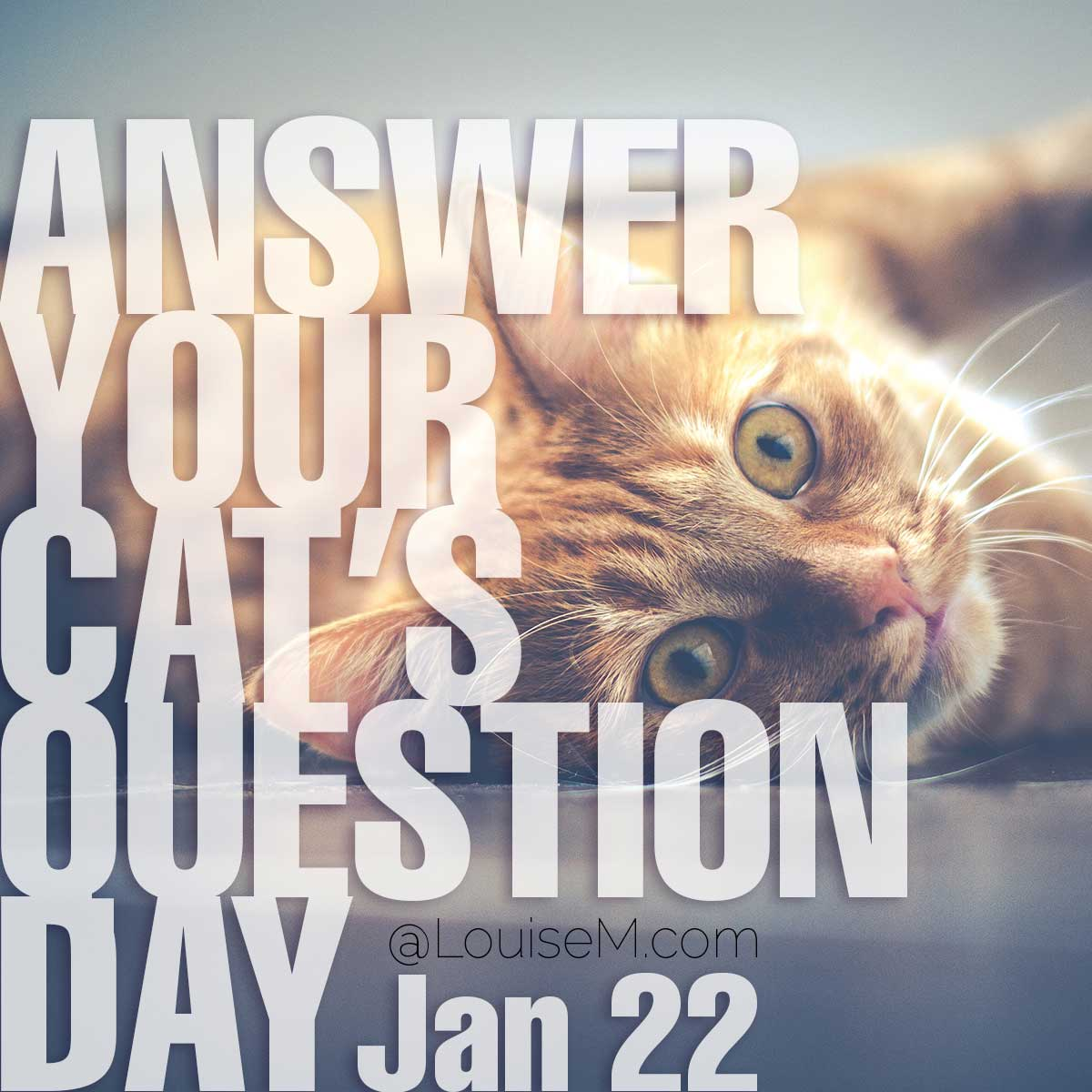 National Answer Your Cat's Questions Day on cute cat photo.