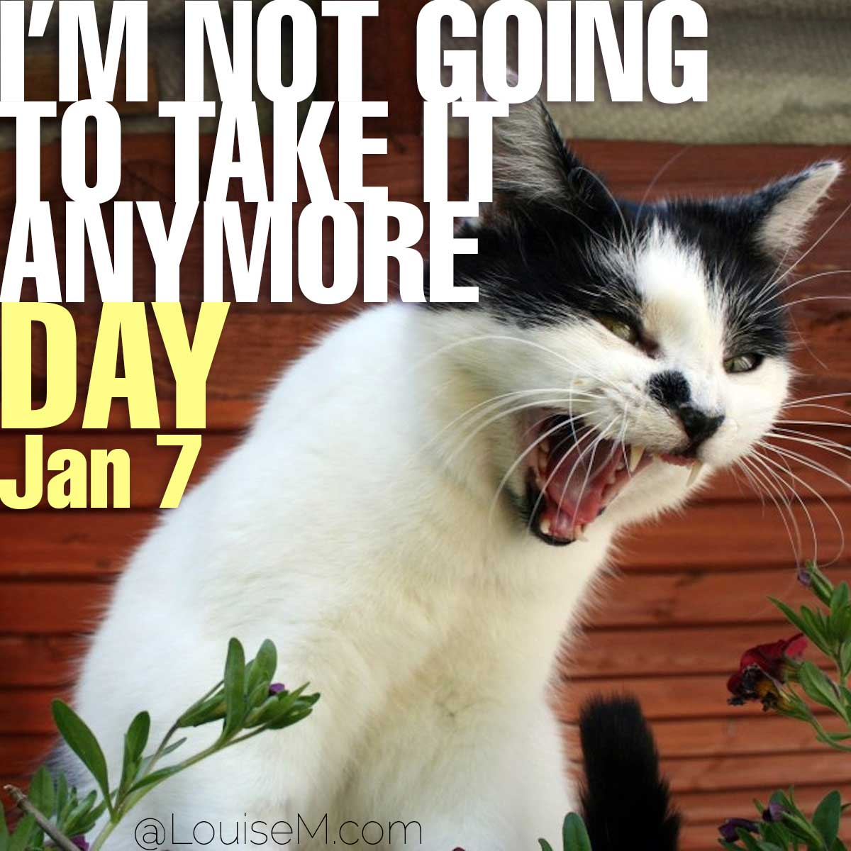 I'm Not Going to Take it Anymore Day text on photo of angry cat.